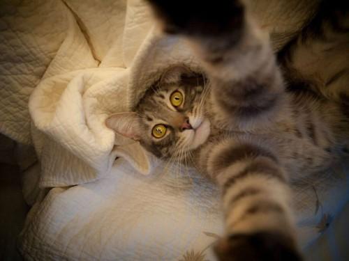 ネコの「自撮り画像」