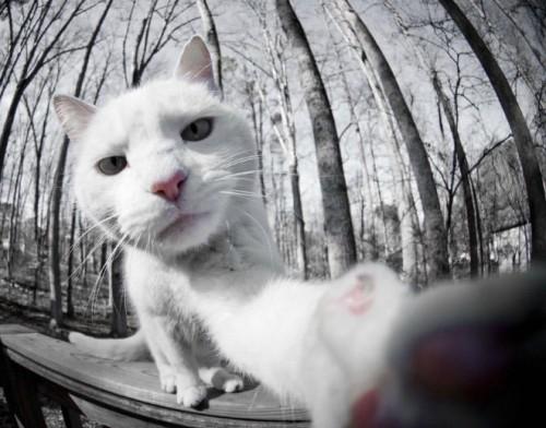 白いネコの「自撮り画像」